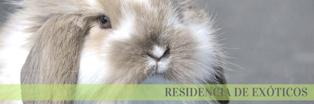 residencia exóticos conejo