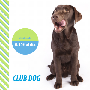 Plan de salud club dog