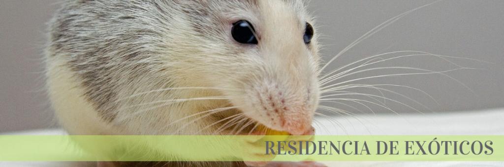 residencia exóticos roedores