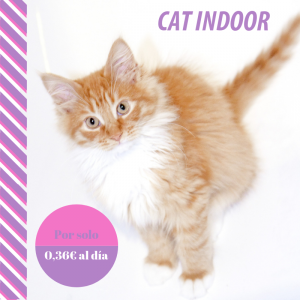 Plan de salud cat indoor