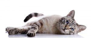 consulta exclusiva gatos