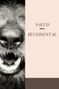 Salud Bucodental