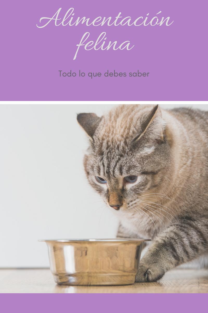 Alimentación felina