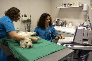 Servicio de ecografía veterinaria