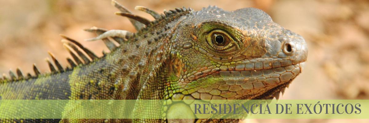 residencia exóticos iguanas