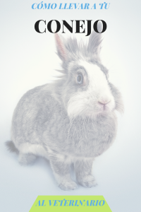 llevar conejo al veterinario