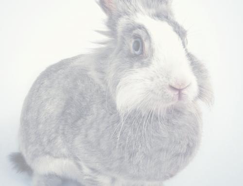Cómo llevar a tu conejo al veterinario