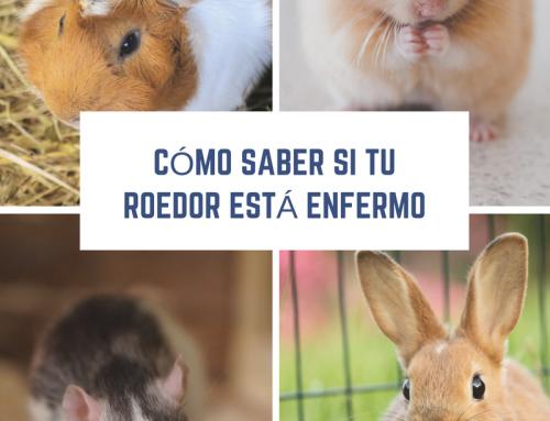 Cómo saber si nuestro roedor está enfermo