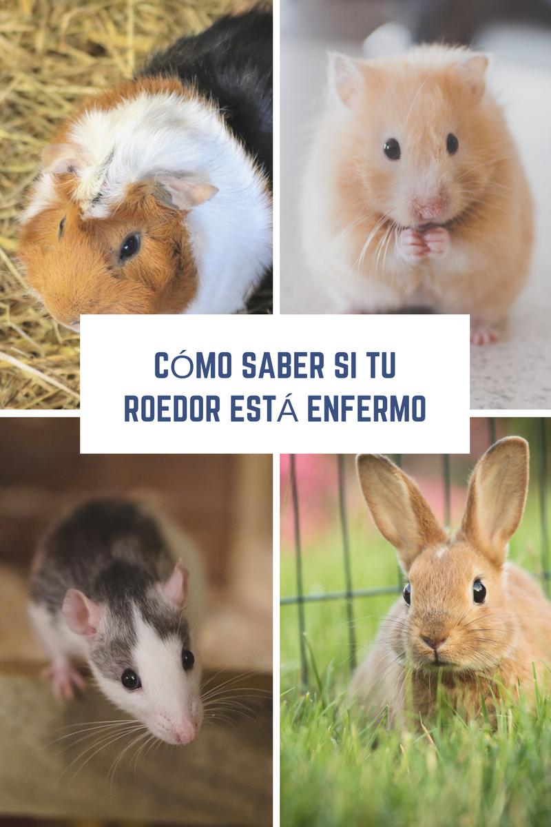 enfermedades en roedores