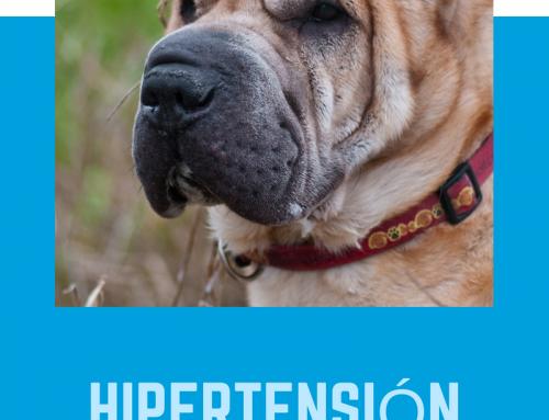 Hipertensión en perros y gatos