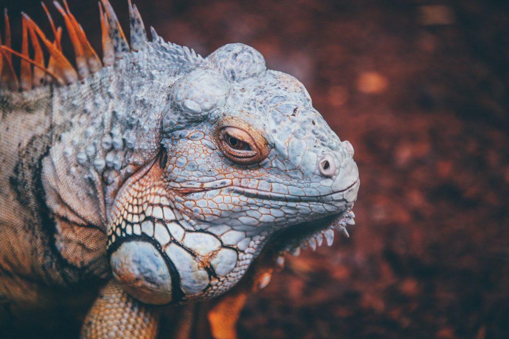 iguana centro veterinario bormujos
