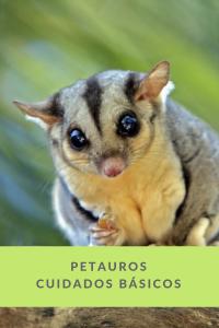 petauros veterinario bormujos