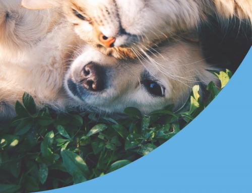 Ectoparásitos en el perro y el gato