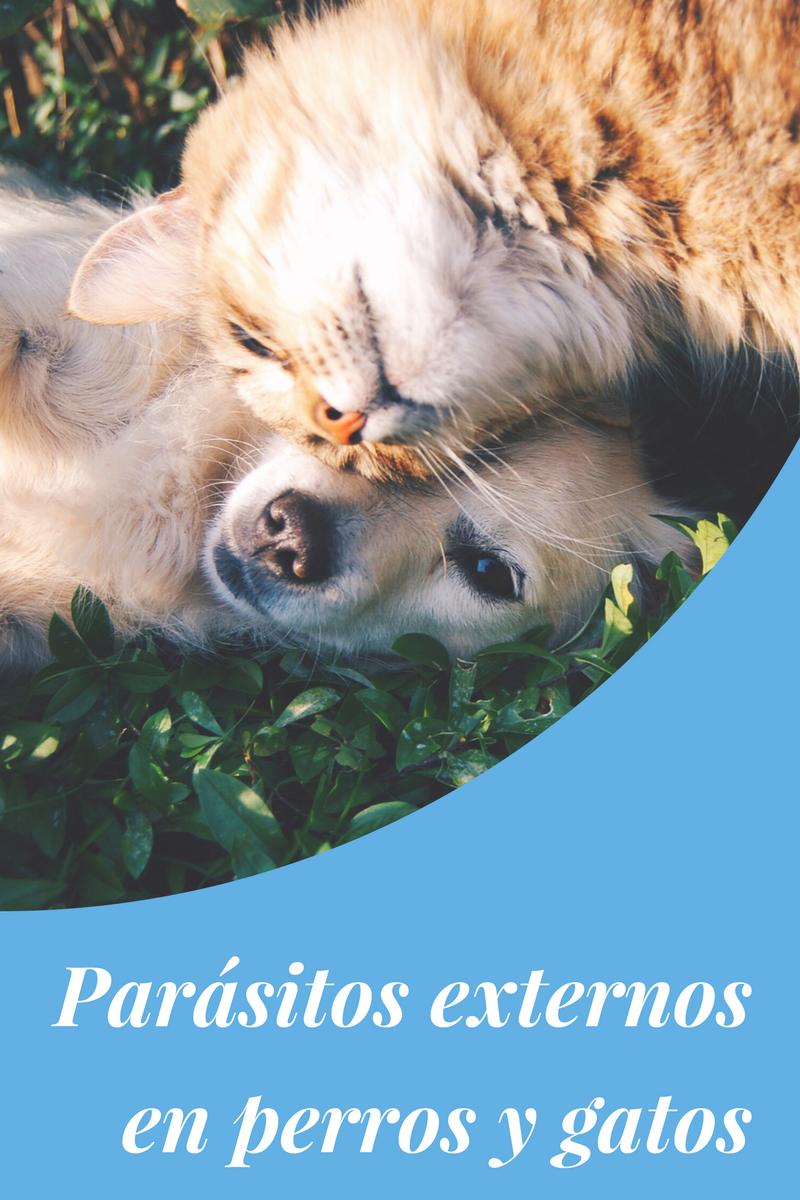 parásitos externos perros y gatos