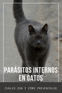 parásitos internos gatos Centro Veterinario Bormujos