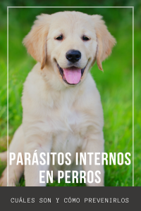parásitos internos perro centro veterinario bormujos