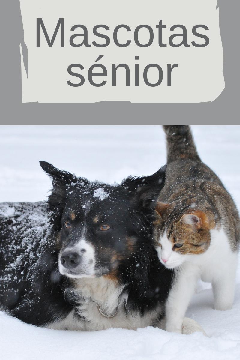 Mascotas sénior