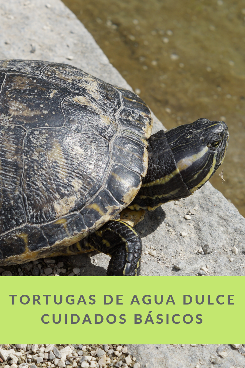 tortuga agua veterinario bormujos