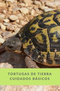 tortugas de tierra